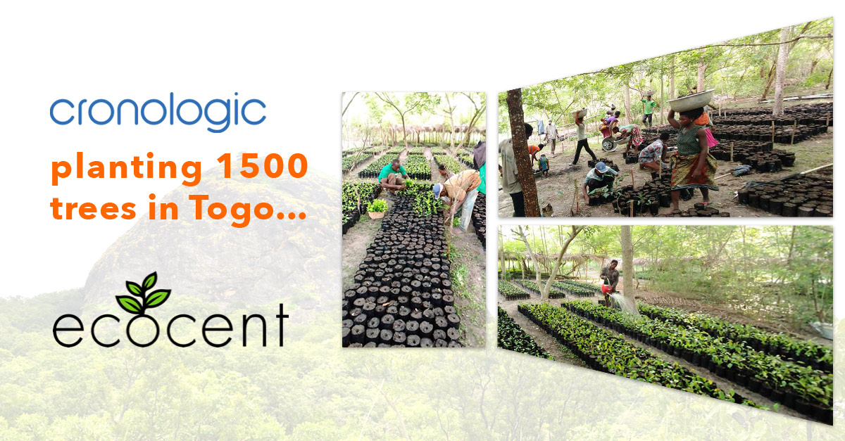 cronologic is planting 1500 trees