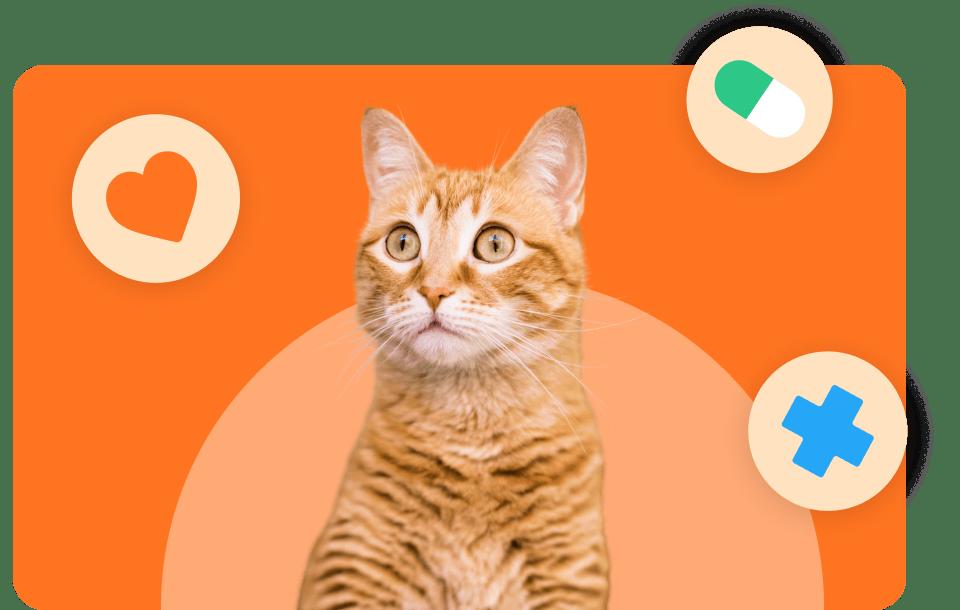 cat looking blur