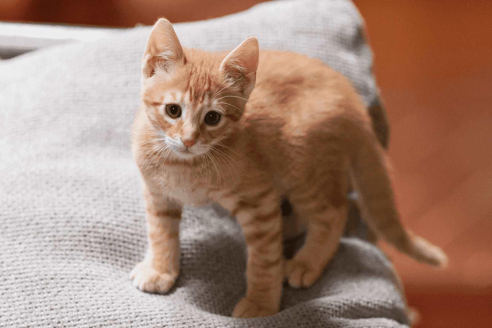 cute oren cats