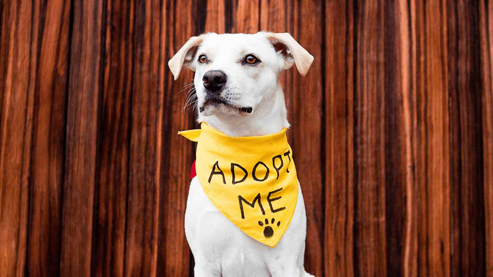 a dog looking for adoption