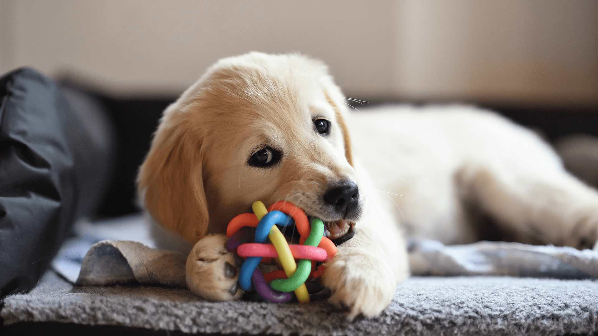 a dog playing with its pet toy