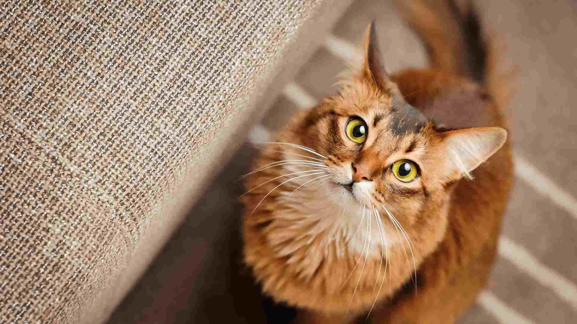 curious cat looking upwards