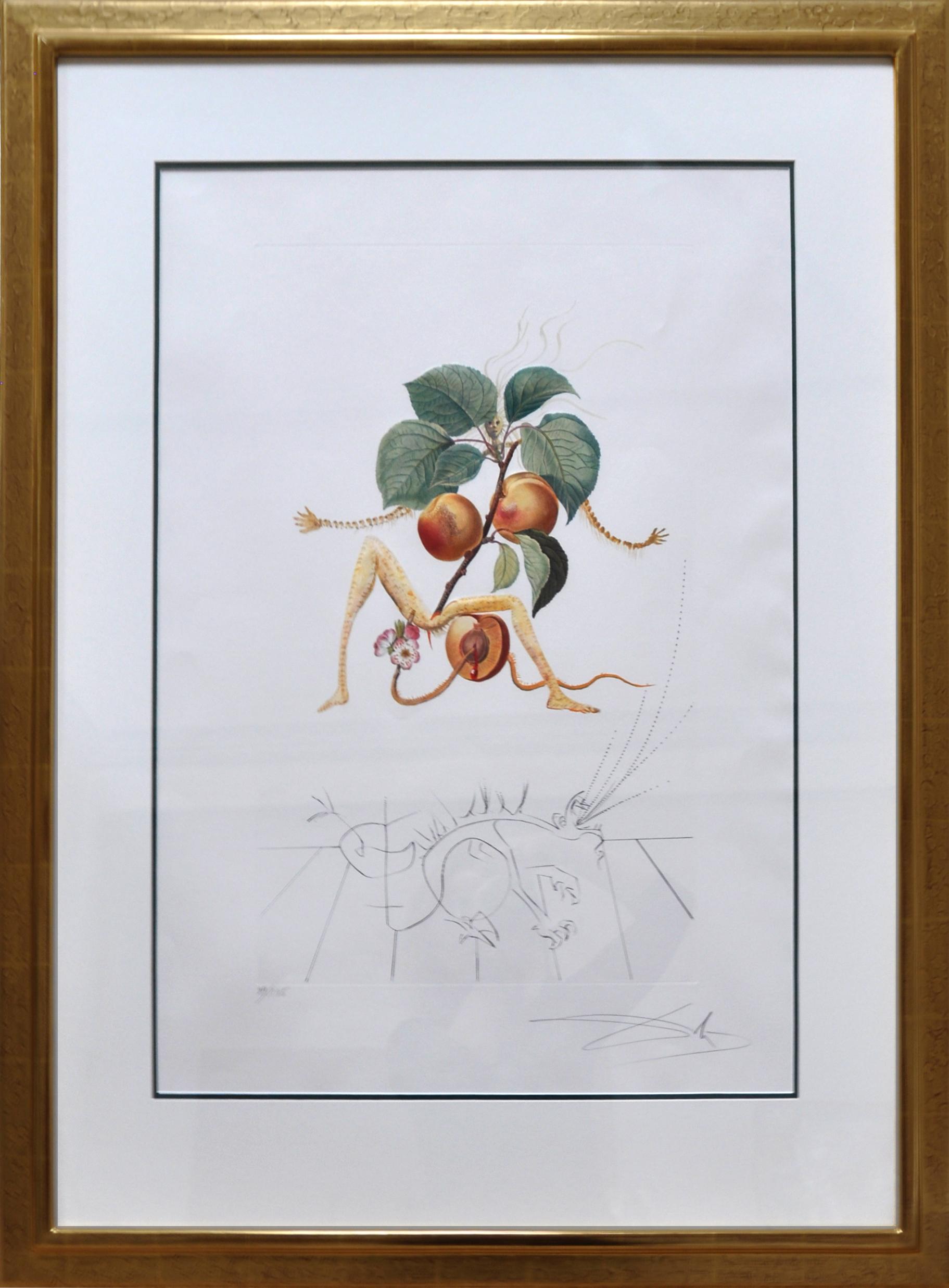 Salvador Dalí - Abricot , 0611-008-542