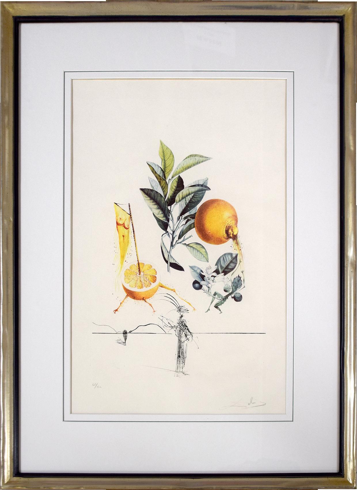 Salvador Dalí - Pampelmousse erotique , 0611-008-545