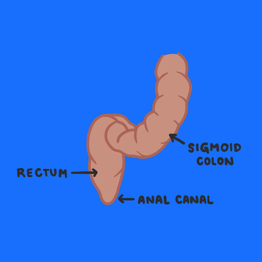 rectum, sigmoid colon and anal canal