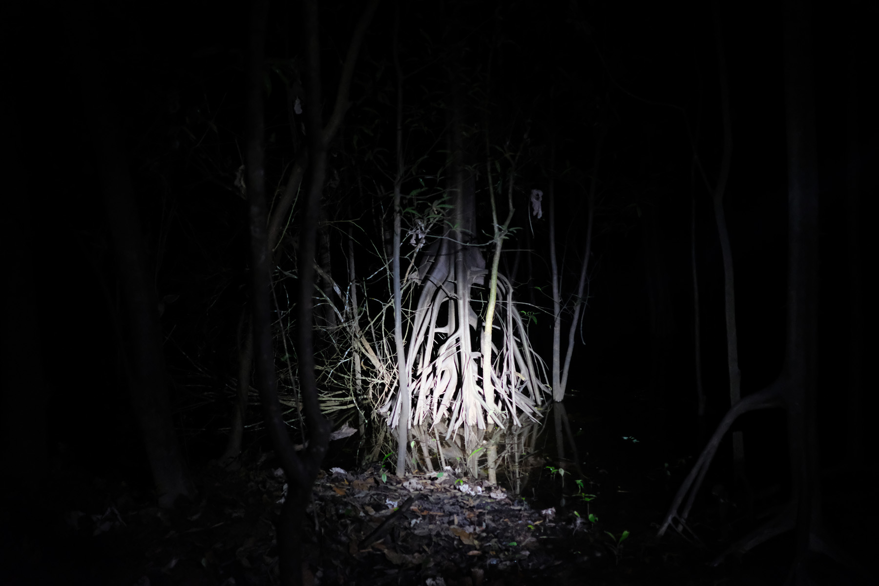 Headlamp-lit Bare Roots in Rainforest / Tilted Horizon