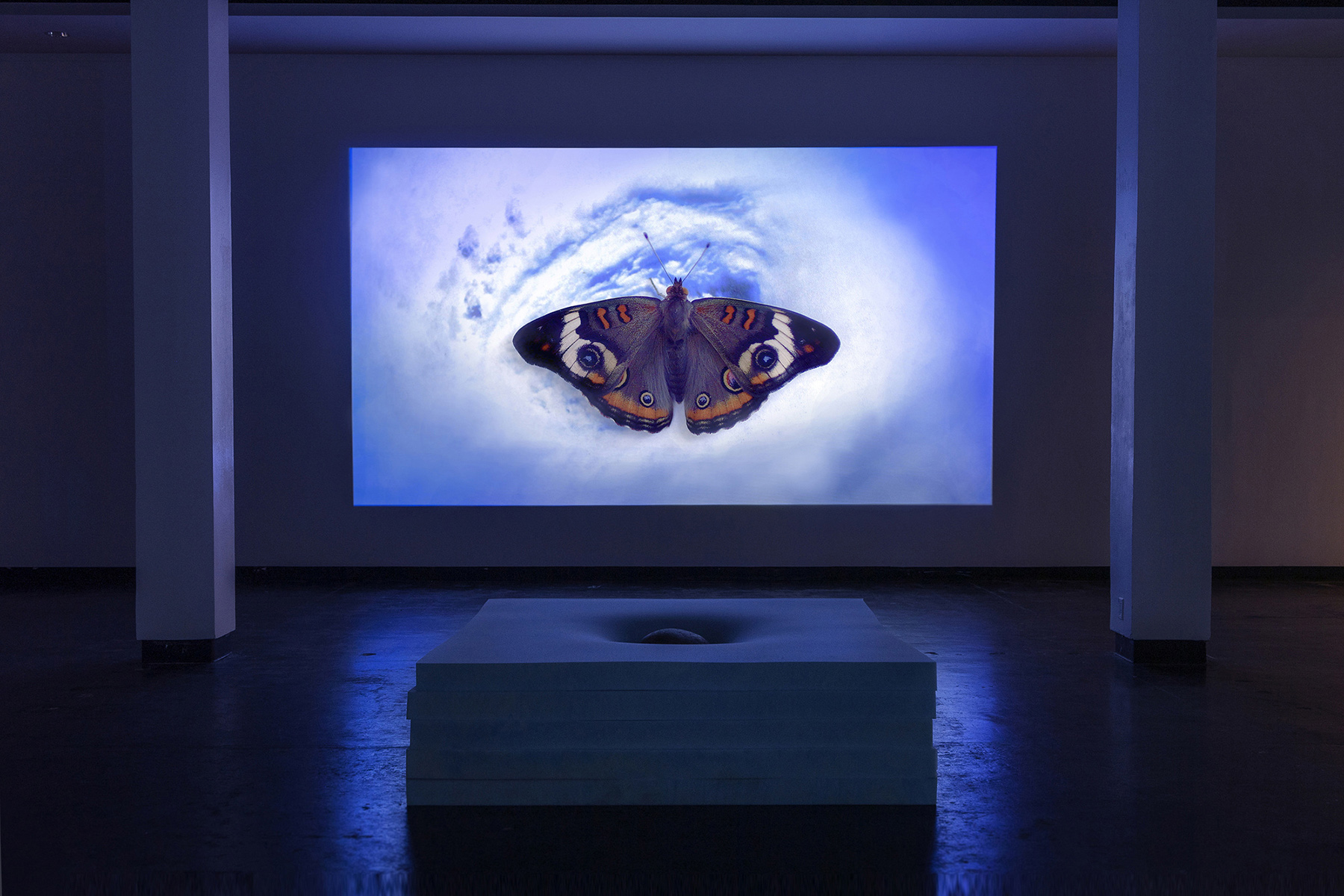 BUTTERFLY BIRTH BED (Video) with HEAD STONE (Sculpture) in the exhibition SKY LOOP, Lawndale Art Center