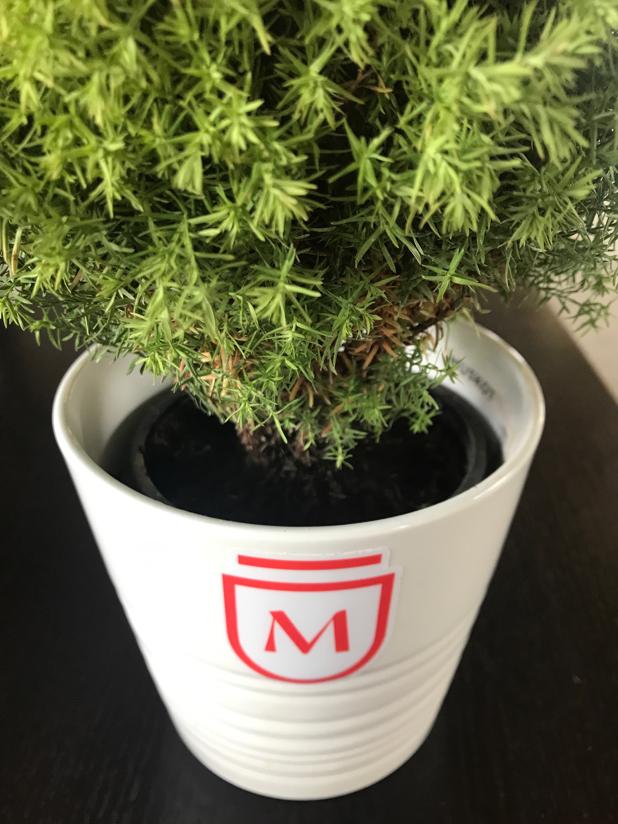 Genm plant
