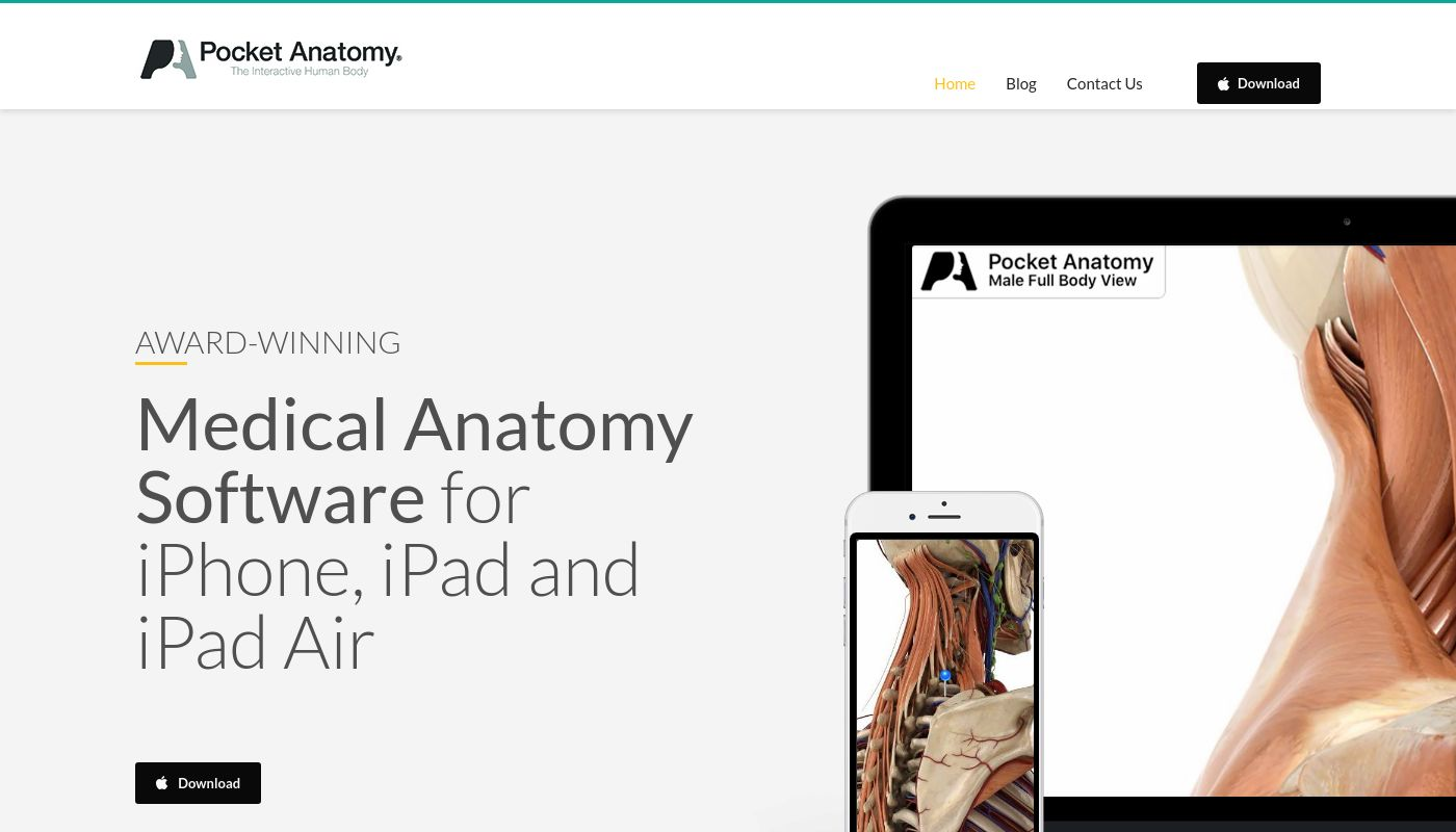 42) Pocket Anatomy