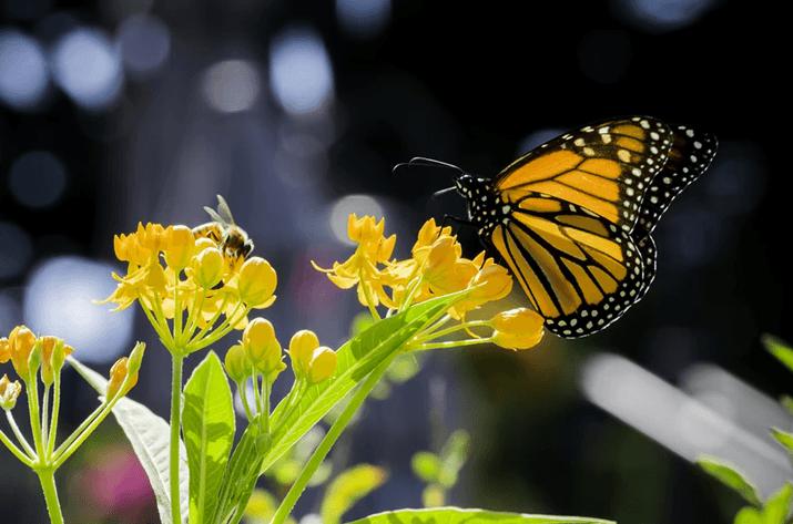 Flow Like a Butterfly, Sting Like a Bee