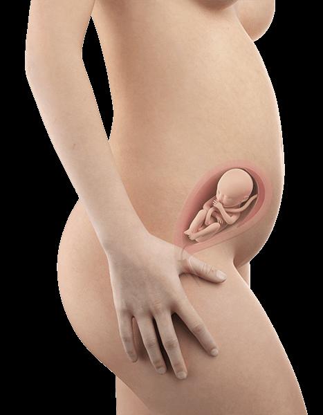 Schwangerschaftswoche 23