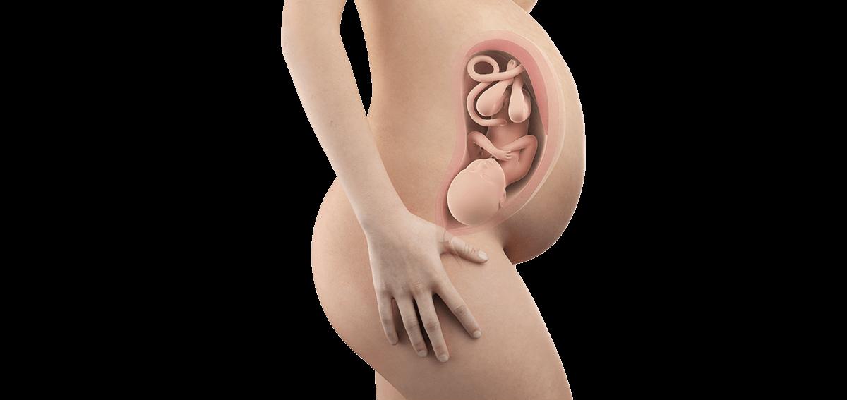 Schwangerschaftswoche 38