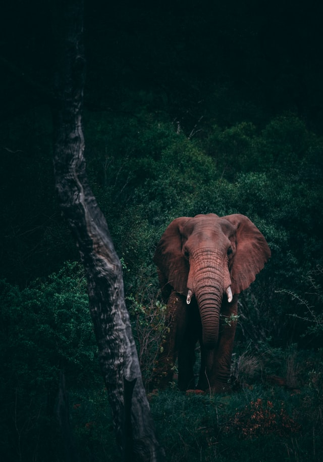 A dark image of an elephant
