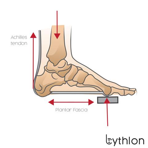 Plantar Fascia and Achilles tendon tension during downstroke