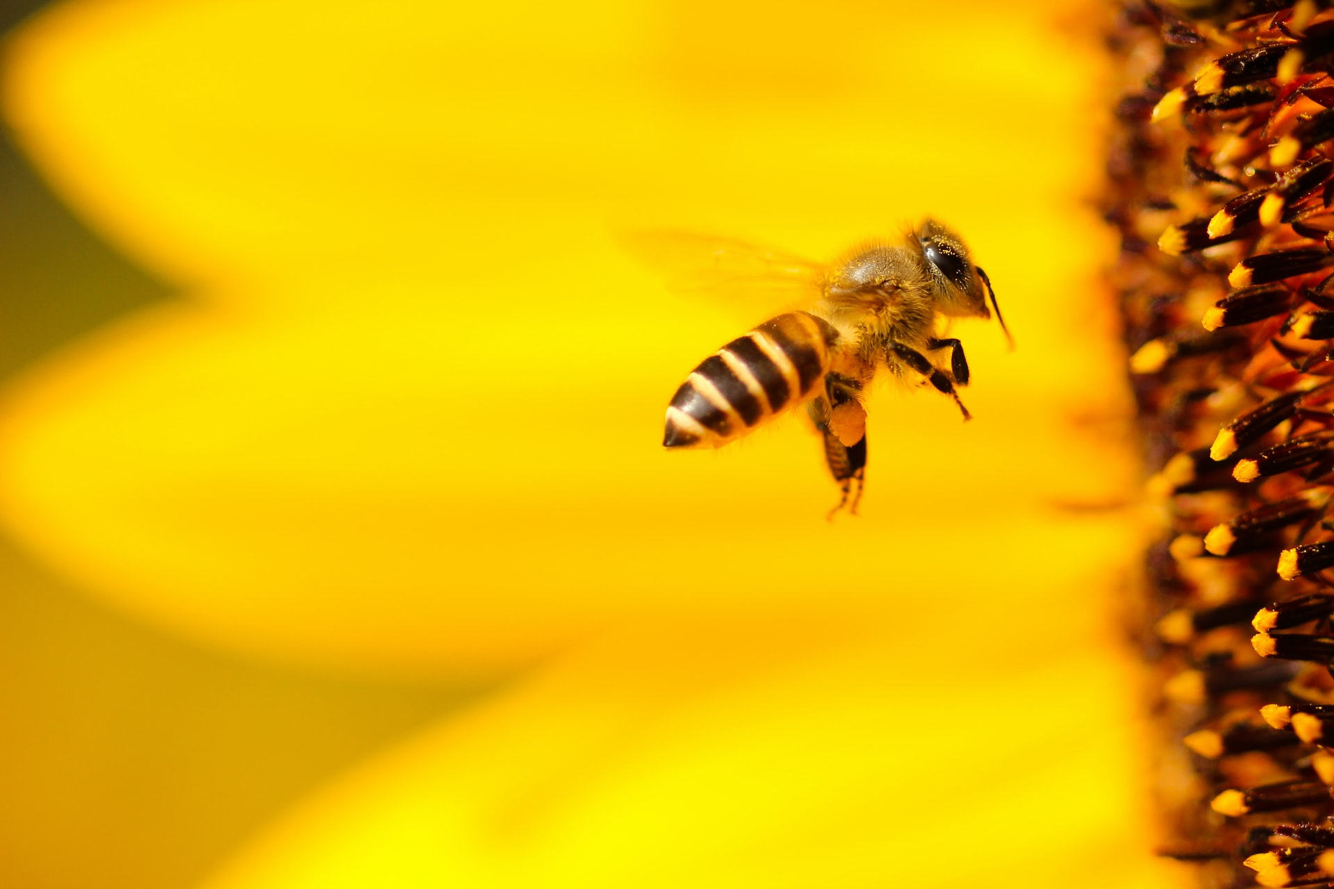 BEE FRIENDLY: HELP THE BEES