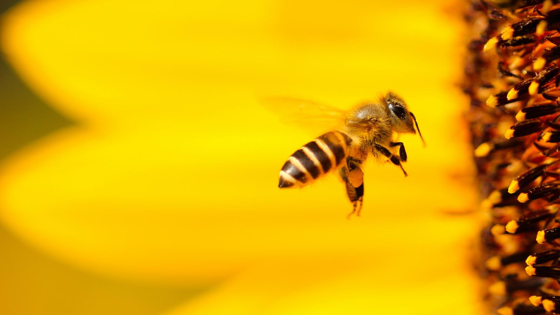 BEE FRIENDLY: HILF DEN BIENEN