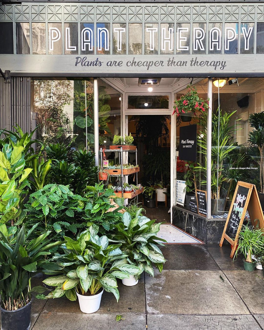 Plant Therapy in San Francisco