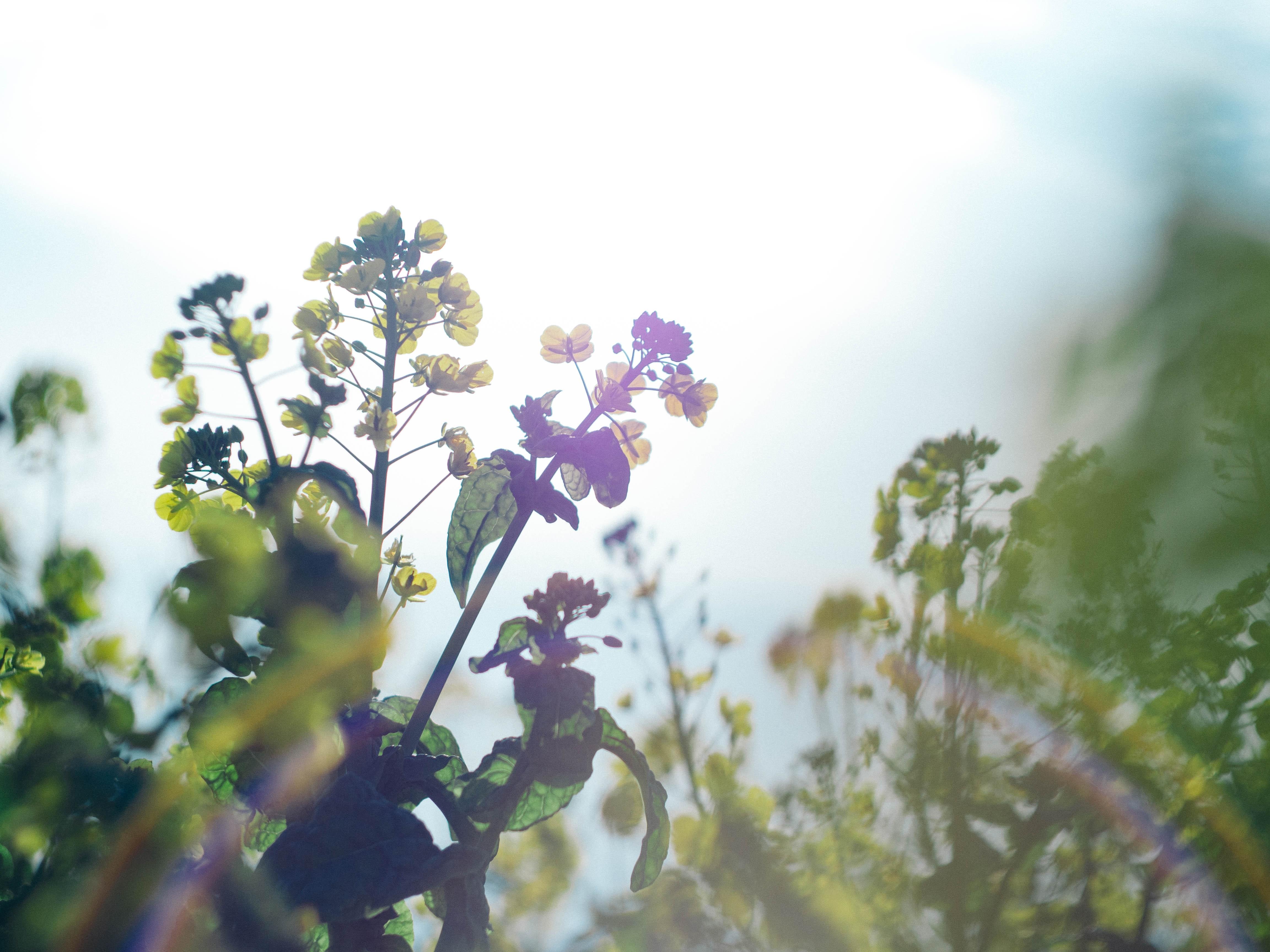 Zonnepanelen wekken 50% meer energie op dankzij warme febraurimaand