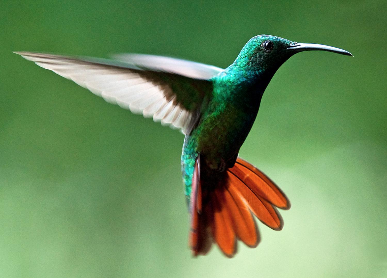 How Google's New Hummingbird Algorithm Works