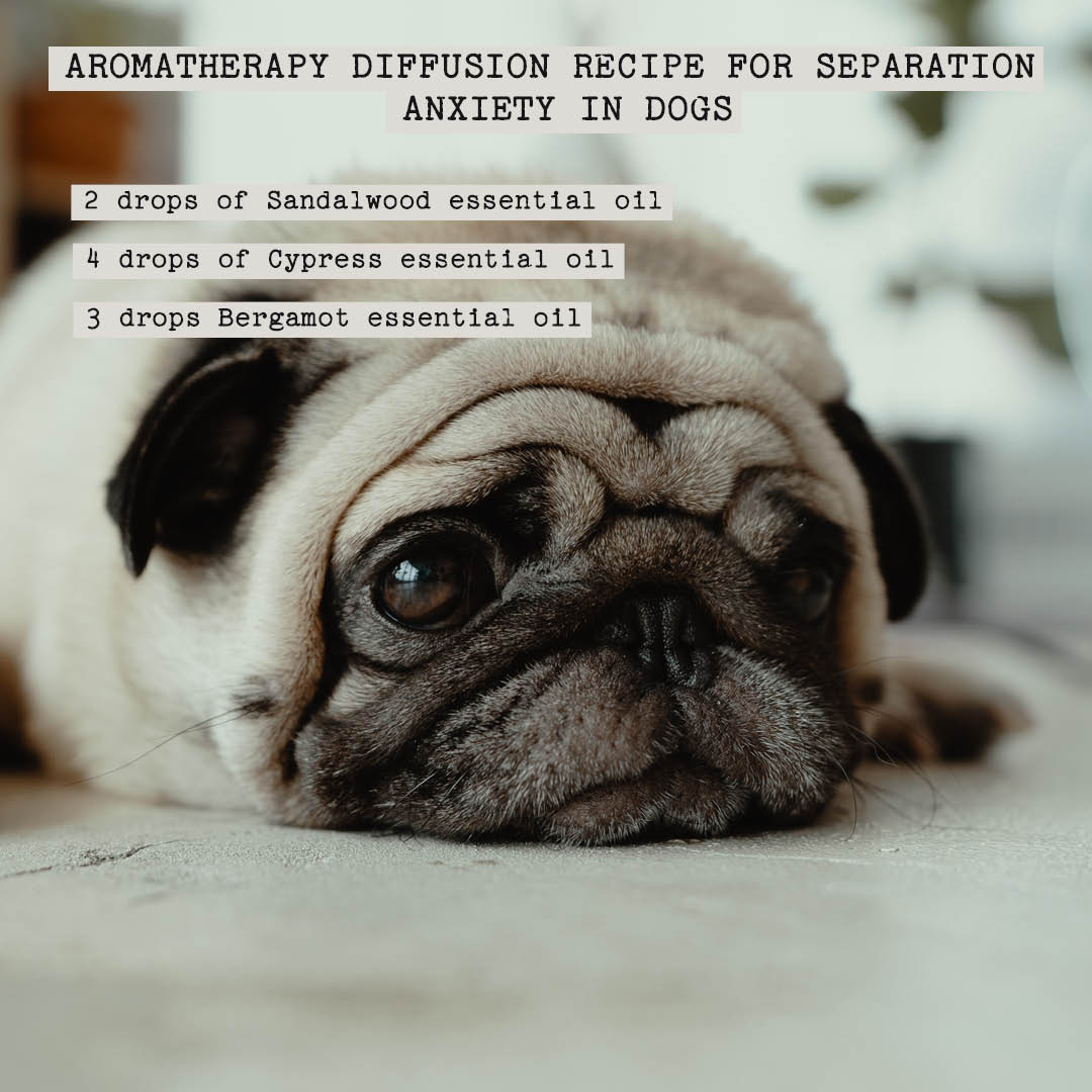 aromatherapy recipe for separation anxiety in dogs