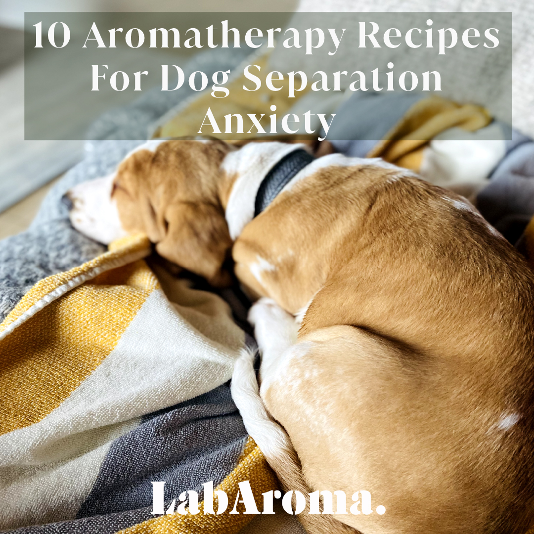 Aromatheapy Recipes for Dog Separation Anxiety by LabAroma