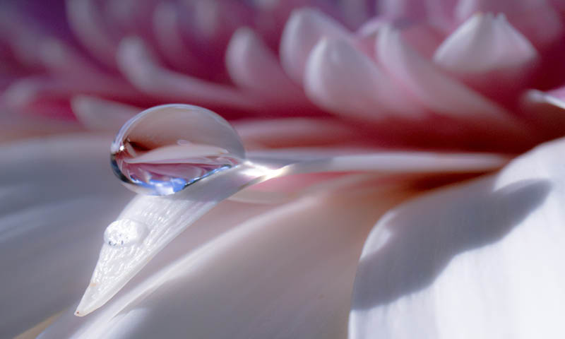 Essential Oils Flower Drop