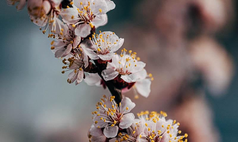 Flowers causing seasonal allergies