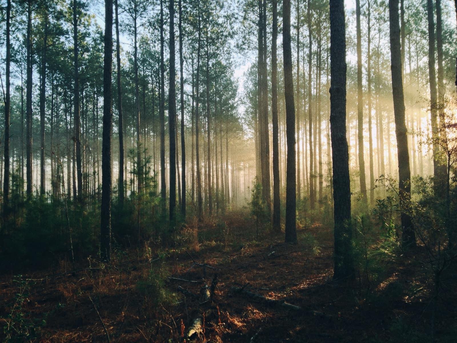 Greenly - Comment compenser son bilan carbone ?