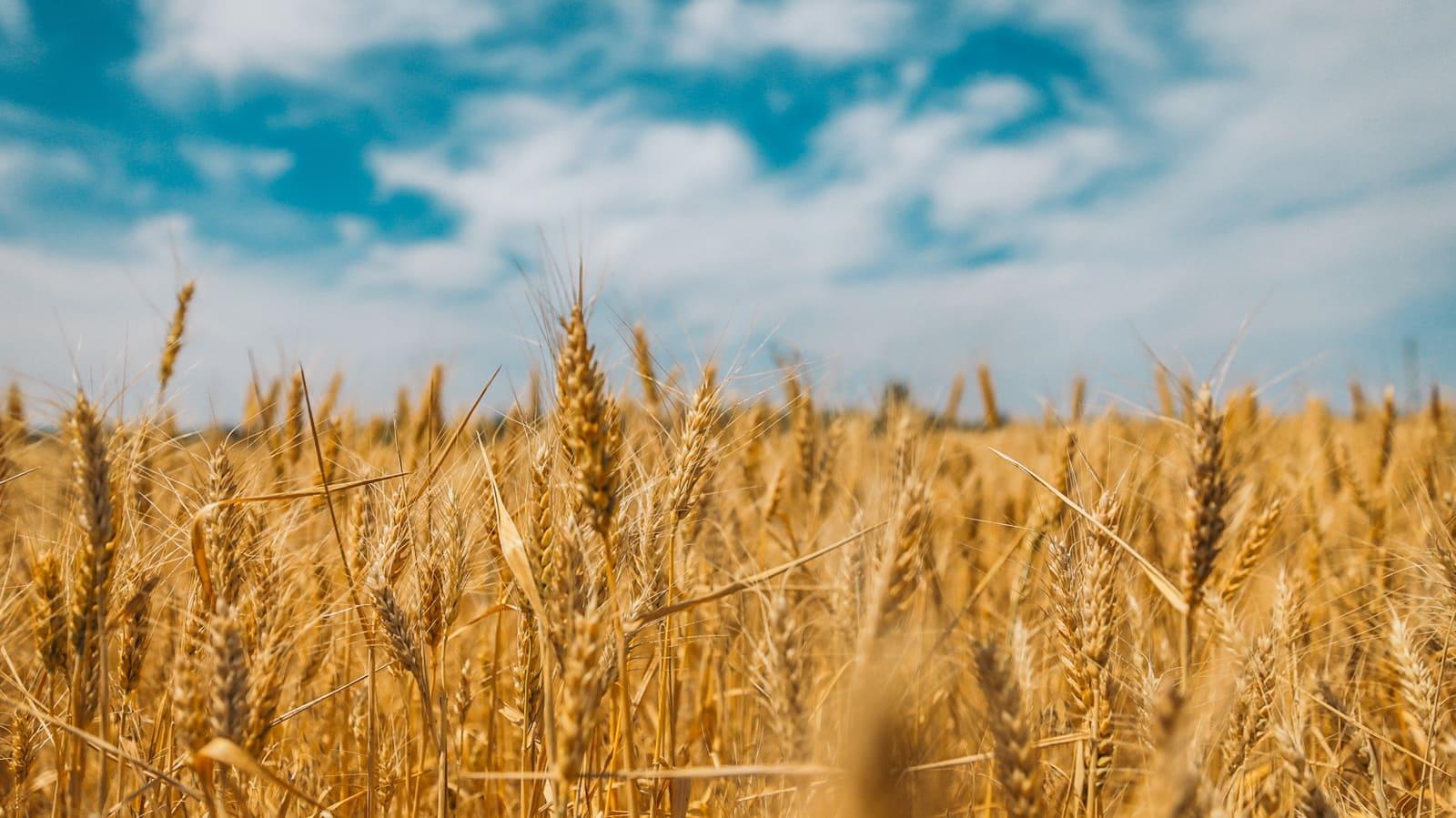 Le bilan carbone d'une exploitation agricole