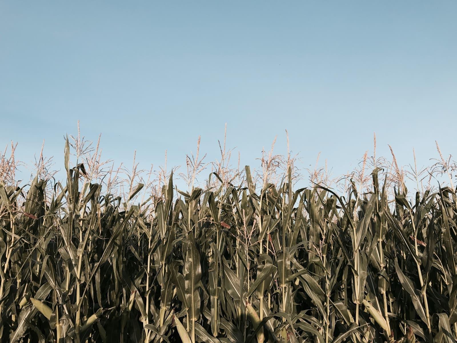 Greenly - Bilan carbone de l'agriculture