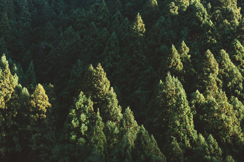 L'impact du protocole de Kyoto