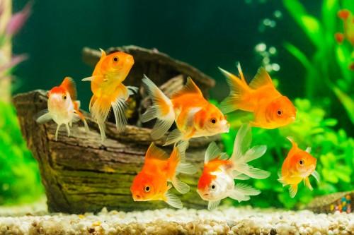 Low tech et aquarium sans filtre