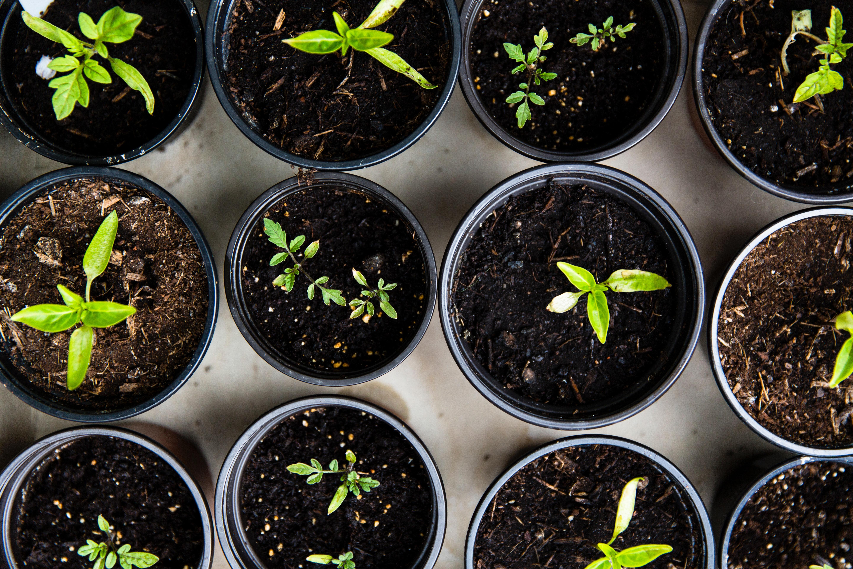 Les 3 piliers du développement durable en entreprise - Greenly