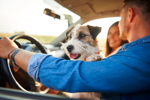 Dog riding in front seat with owners
