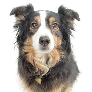 Dog named Thistle