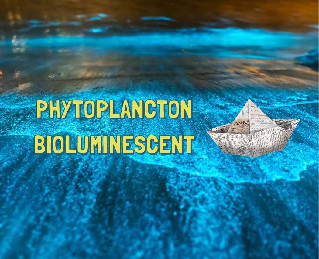 As-tu pu observer des vagues fluorescentes ? Des plages qui brillent la nuit d'une lueur bleue surnaturelle ? C'est grâce au phytoplancton !