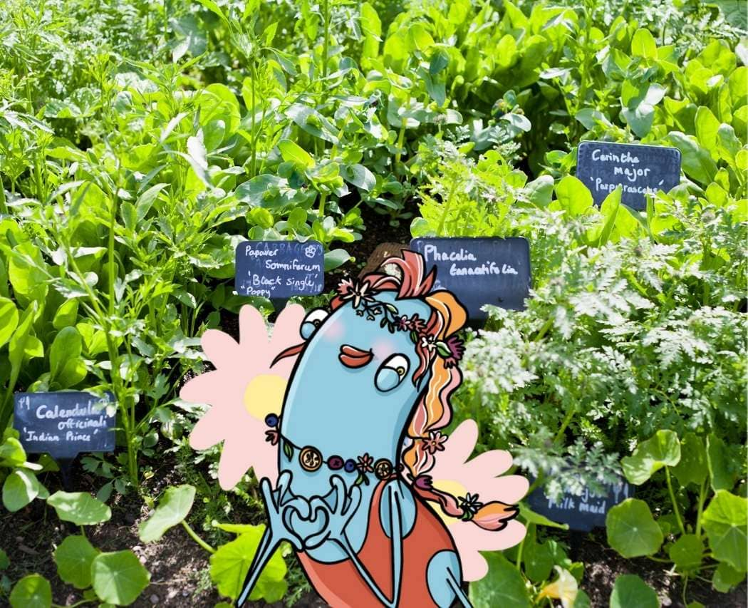 JU dans son jardin de plantes medicinales