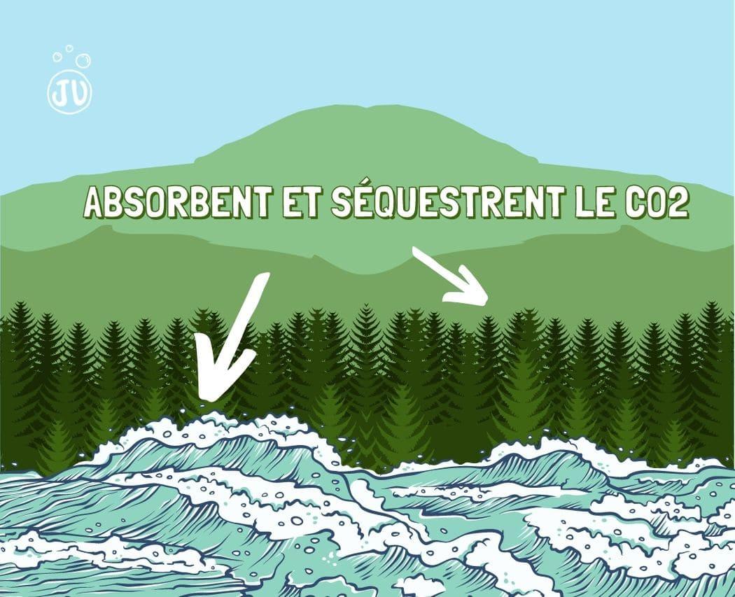 Puits de carbone foret et ocean absorbent et stockent CO2