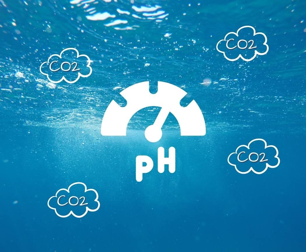 Acidification des océans : définition, causes, conséquences...