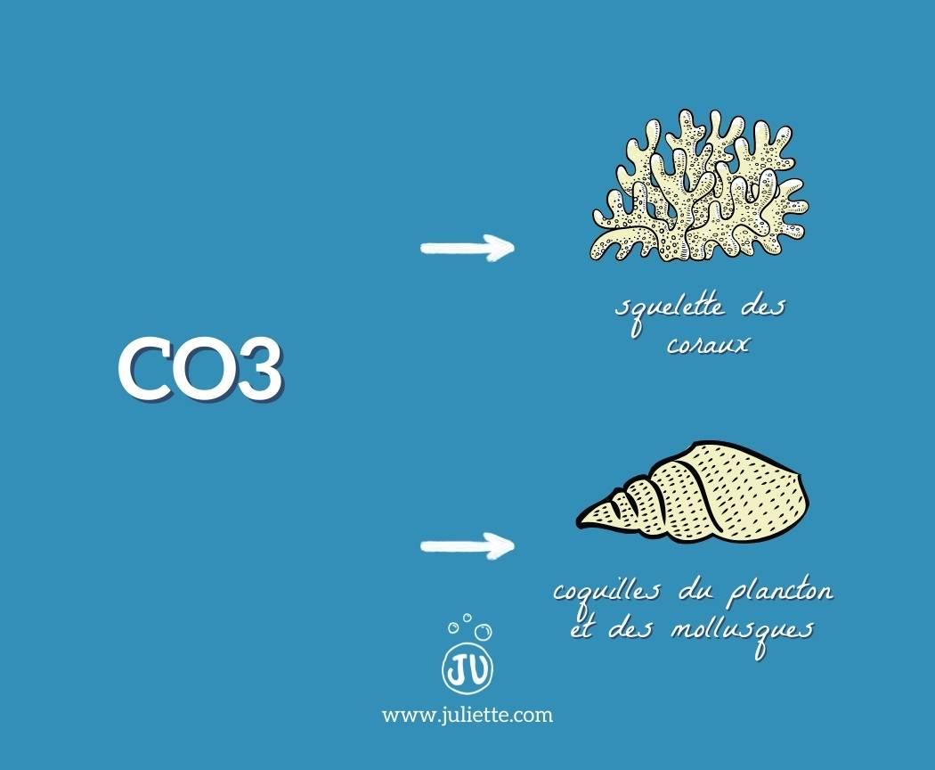 Carbonate de calcium squelette des coraux et coquilles pytoplancton