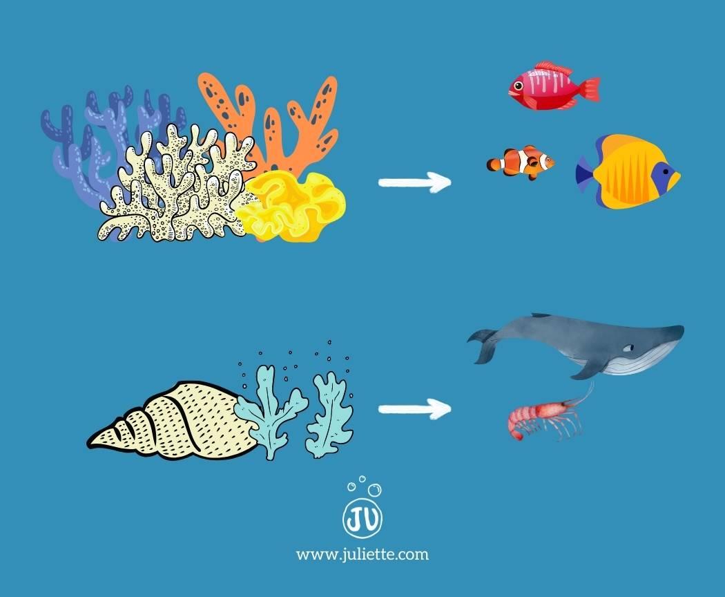 Ecosystemes marins menaces par acidification des oceans