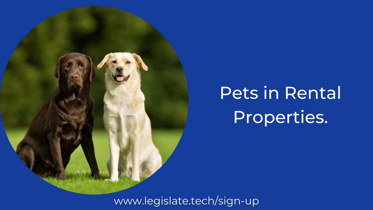 Pets in rental properties: To be or not to be?