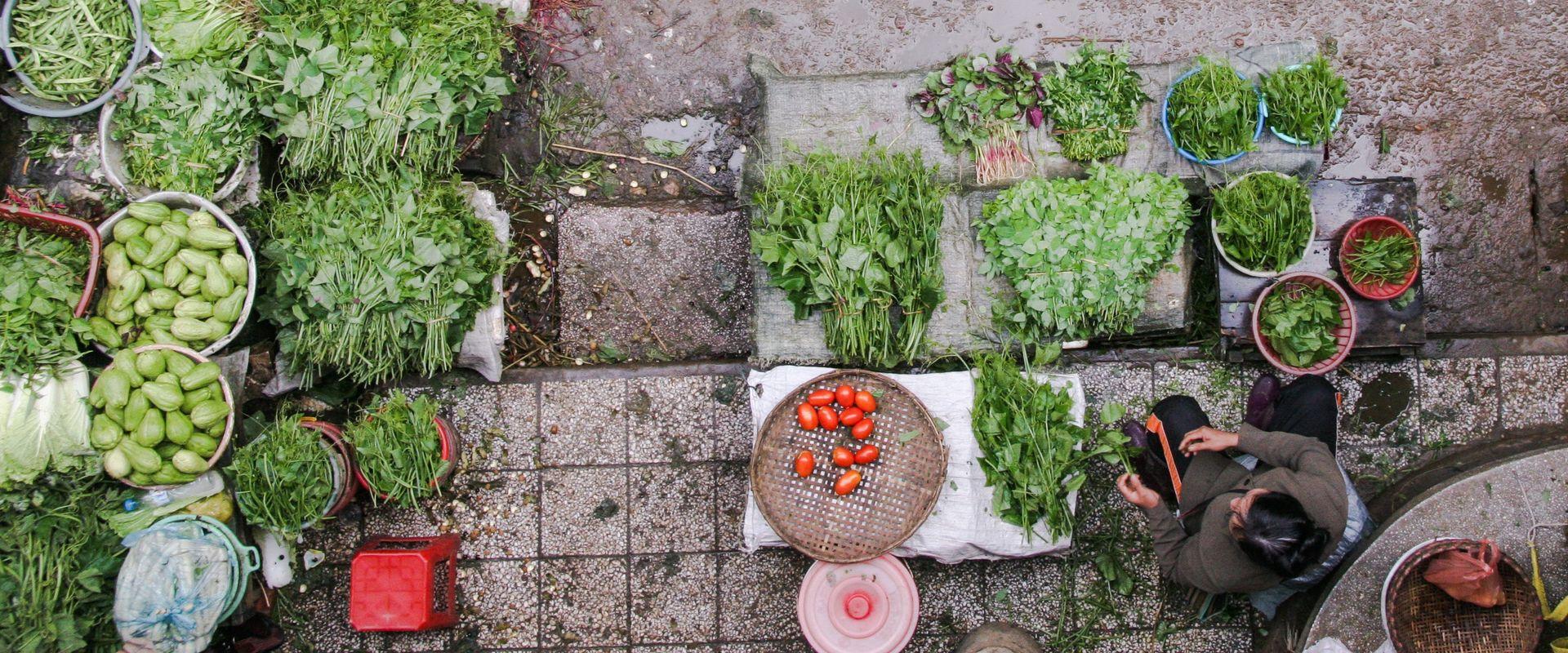 many green plants/vegetables