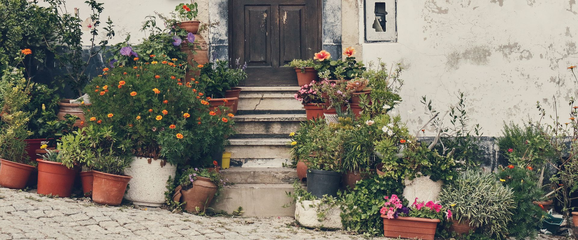 flowers and house
