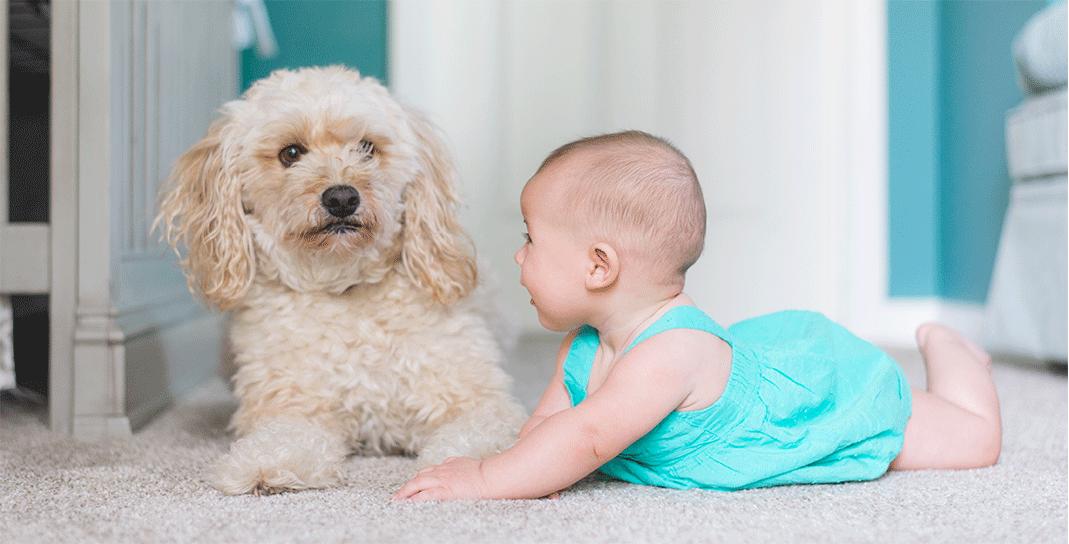 Babycare brand - Tinystep