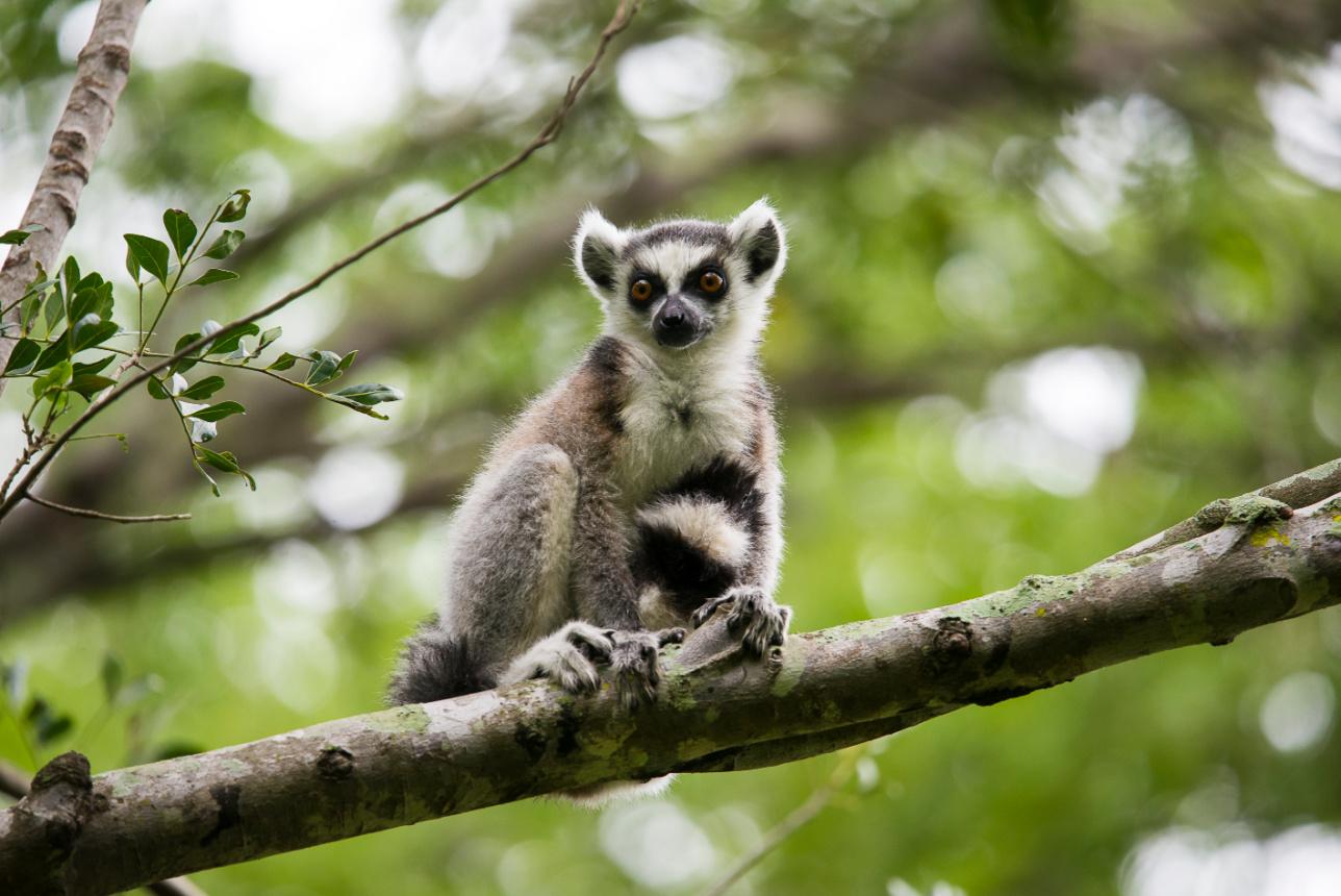 6 Reasons to visit Madagascar