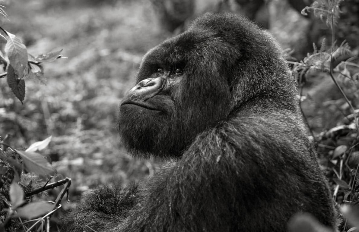 A life-changing Rwanda Gorilla Trek