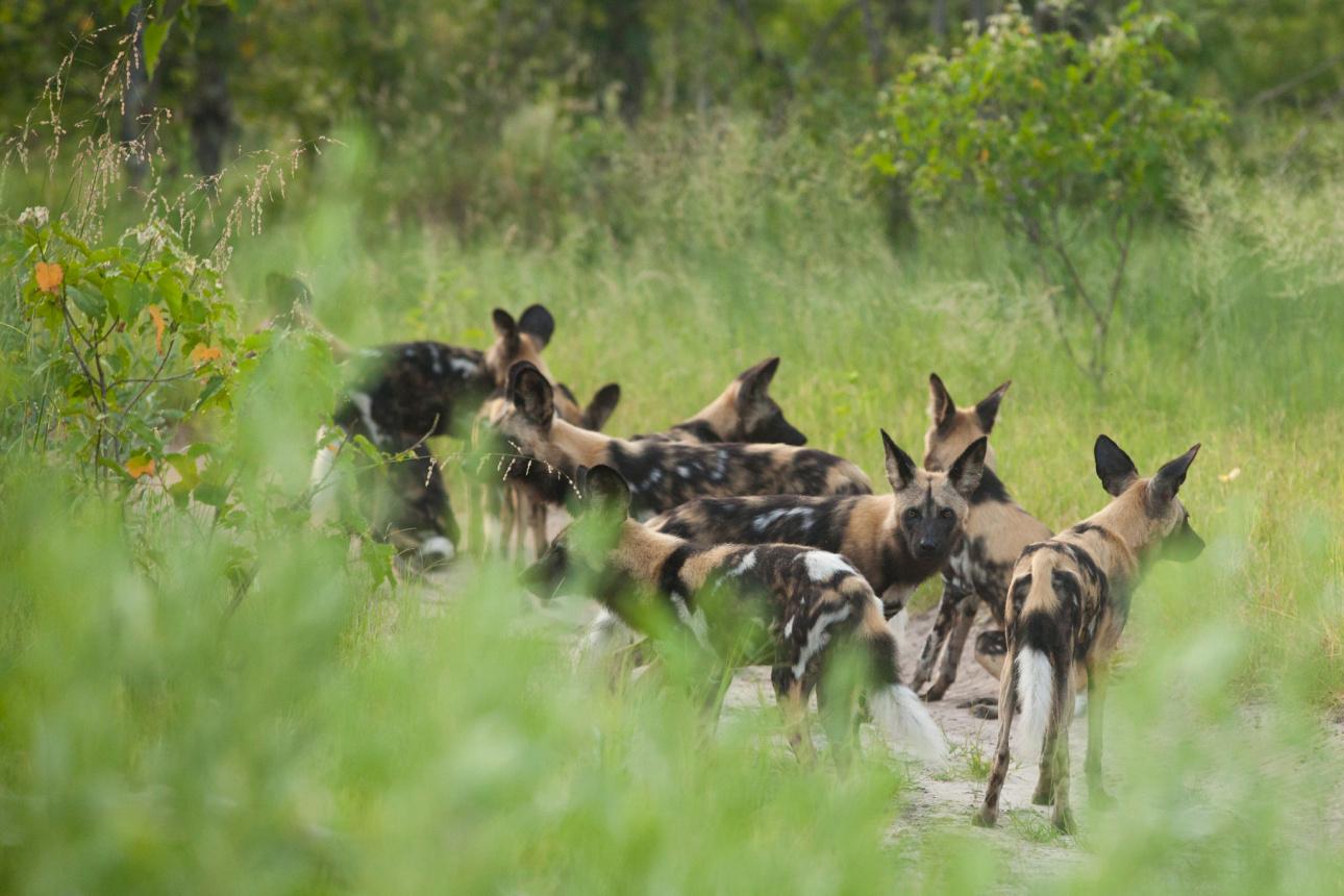 Bucket-list Abounding | Tanzania
