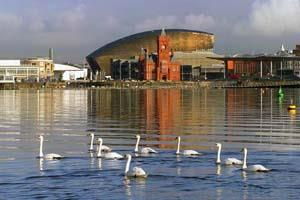 Cardiff Bay Tours & Road Train