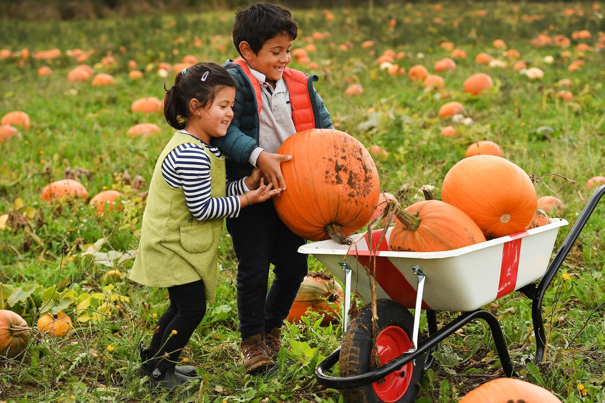 Pumpkin Patch Pick Your Own Pumpkins